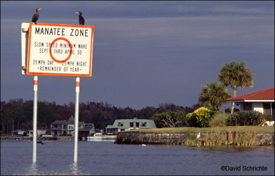 Boat Speed Zone Regulatory Sign for Manatee Protection